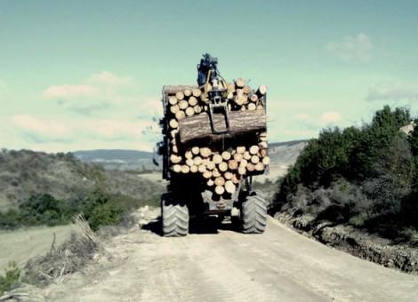 Curiosa estampa del autocargador desemboscando madera gruesa. 2013