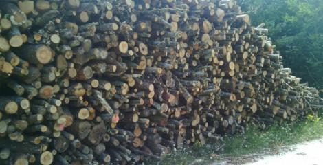 Pilas de haya-roble, ya medidas y listas para desembosque. 2015