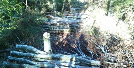 Aprovechamientos forestales en hayedo (tronquillo y biomasa). 2014