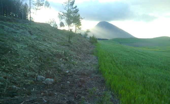 Estado final de área cortafuegos entre superficies forestales y campos de cultivo. Ibargoiti 2013