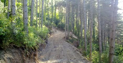 Apertura de nueva pista para aprovechamiento de pinares. Monreal 2012