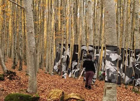 Detalle del bosque de hayas de Zilbeti
