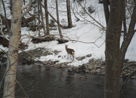 Ciervo-caza-sielba
