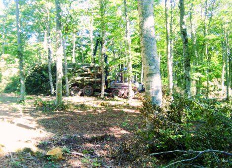 Maquinariaforestal-sielba-biomasa